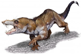 This species lived 231 million years ago and was about 25 centimeters long. It was found in Ischigualasto, northwest Argentina, by researchers from the University of San Juan (IMCN), the Science, Technology and Society Agency (CTyS) of the National University of La Matanza (UNLaM) reported today.