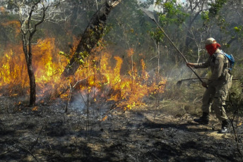 Pará.- The Department of Military Bombers of Pará intensifies the actions to stop the fires in the vegetation. The combination of dry climate and human action are the main causes of forest fires registered in the state.